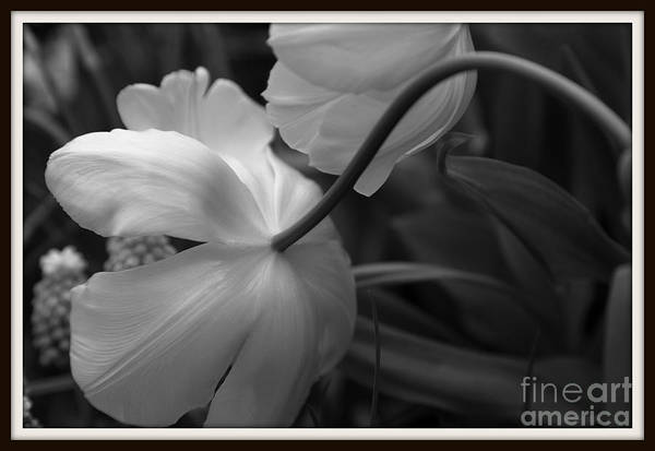 Photograph - Graceful Elegance by Mary Lou Chmura