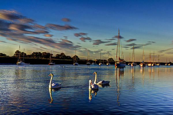 Swan Boats Photograph - Graceful Evening Swans by David Pyatt