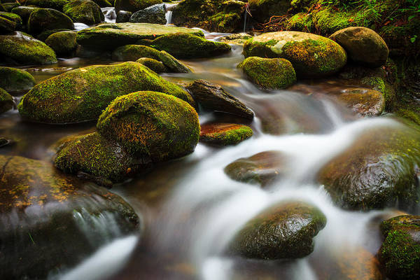 Photograph - Graceful Flows by Keith Allen