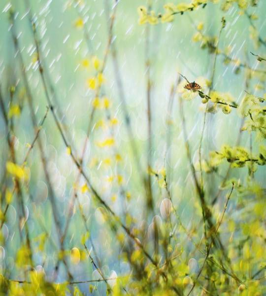 Blur Wall Art - Photograph - Graceful In Bud by Delphine Devos