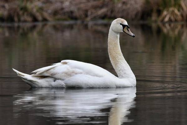 Photograph - Graceful Lady by Mike Farslow