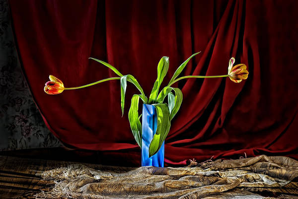 Flowers In A Vase Photograph - Graceful Tulips In A Blue Vase by Leah McDaniel