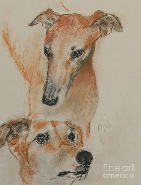 Sight Hound Drawing - Graciously Greyhound by Cori Solomon