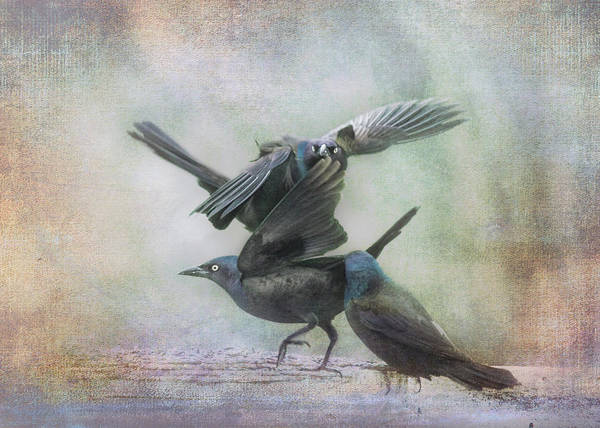 Wall Art - Photograph - Grackle Dance by Susan Capuano