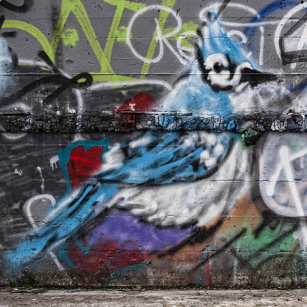 Wall Art - Photograph - Graffiti Bluejay by Carol Leigh