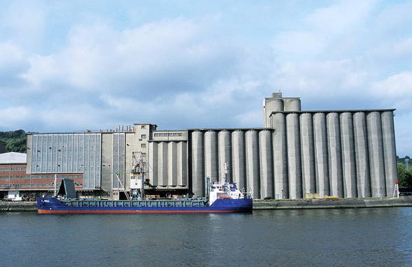 Warehouse Photograph - Grain Silos by Pascal Goetgheluck/science Photo Library