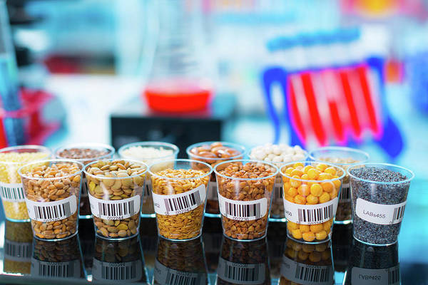 Modified Photograph - Grains And Legumes In Lab by Wladimir Bulgar
