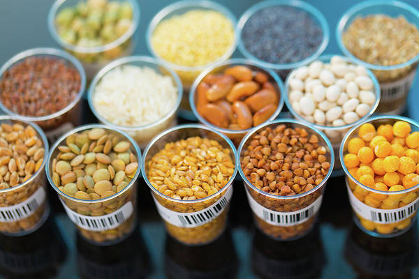 Modified Photograph - Grains And Legumes by Wladimir Bulgar