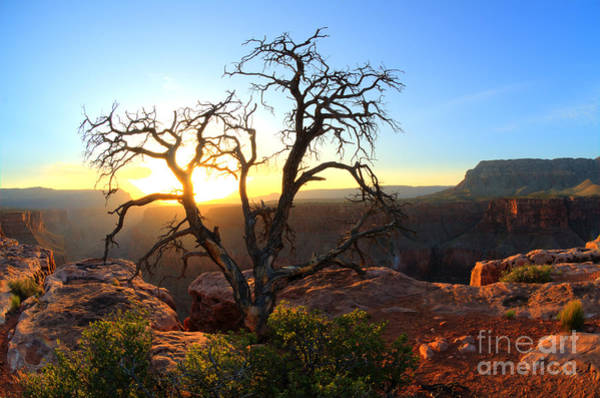 North Rim Photograph - Grand Canyon Gathering The Light by Bob Christopher