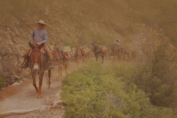 Photograph - Grand Canyon Mule Train by Tom Singleton