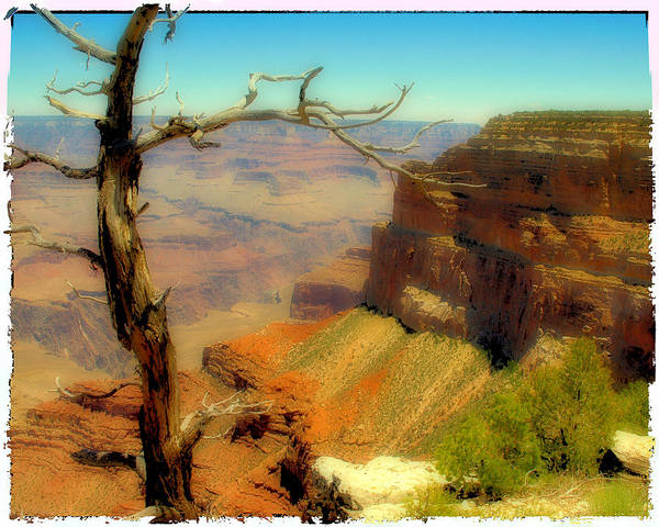 Photograph - Grand Canyon Polaroid by Wayne Wood