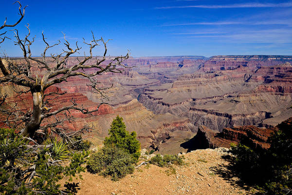 Photograph - Grand Canyon South Rim Trail by Greg Norrell