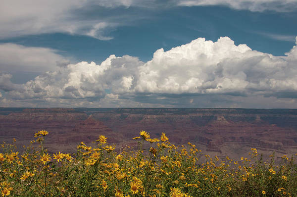 Geology Photograph - Grand Canyon With Flowers In Foreground by Carolyn Hebbard