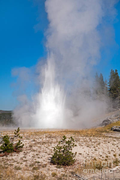 Photograph - Grand Geyser In Upper Geyser Basin In Yellowstone National Park by Fred Stearns