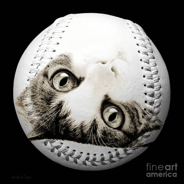 Photograph - Grand Kitty Cuteness Baseball Square B W by Andee Design