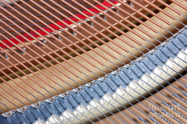Photograph - Grand Piano Strings by Clarence Holmes