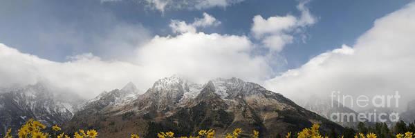 Balsamorhiza Sagittata Photograph - Grand Teton National Park by Wildlife Fine Art