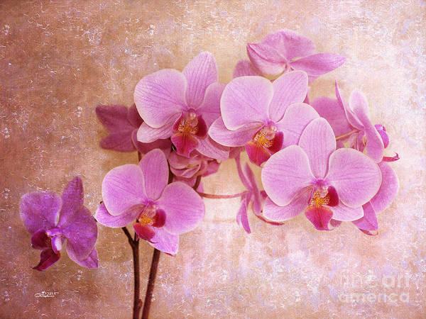 Photograph - Grandma's Dream Orchid by Jutta Maria Pusl