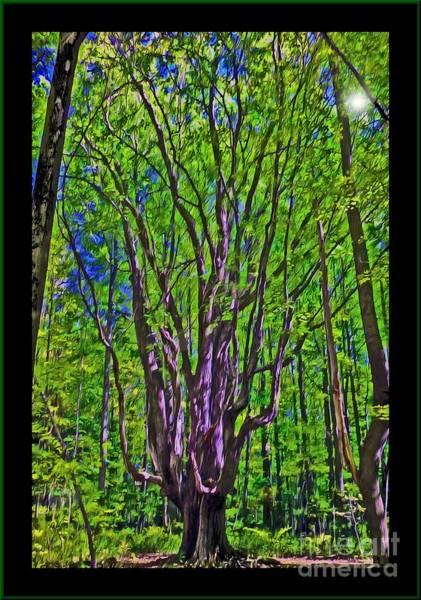Digital Art - Grandmother Tree by Kathryn Strick