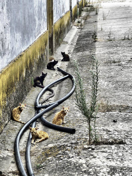 Photograph - Grandola Cats by Pedro Fernandez