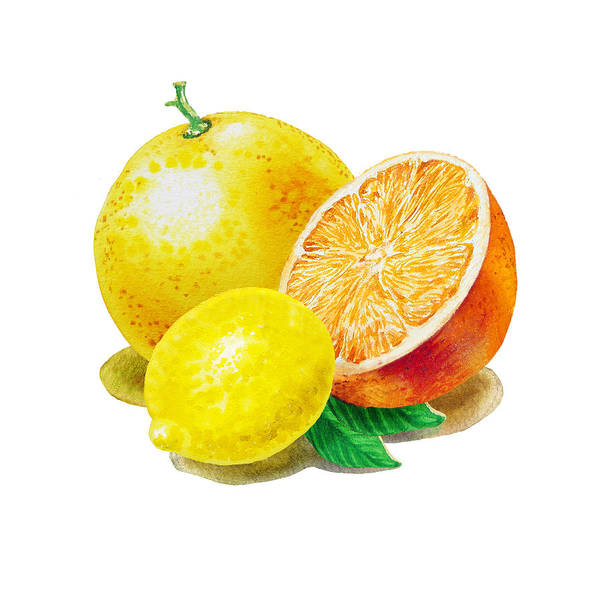 Wall Art - Painting - Grapefruit Lemon Orange by Irina Sztukowski