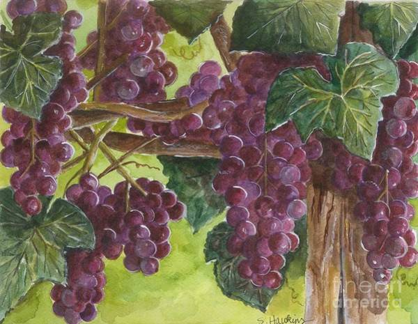 Wall Art - Painting - Grapes On The Vine by Sheryl Heatherly Hawkins