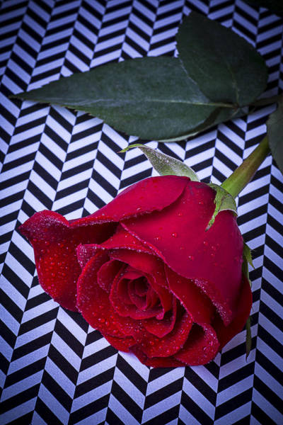 Wet Rose Wall Art - Photograph - Graphic Rose by Garry Gay