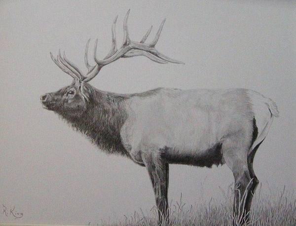 Wall Art - Drawing - Graphite Drawing - Elk by Roena King
