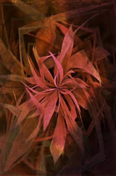 Photograph - Grass Abstract - Fire by Marianna Mills