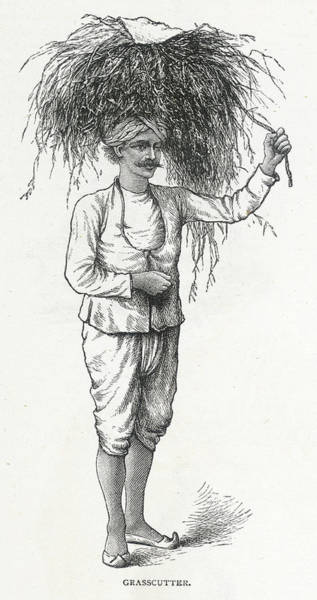 Wall Art - Drawing - Grass Cutter Punjab         Date 1891 by Mary Evans Picture Library