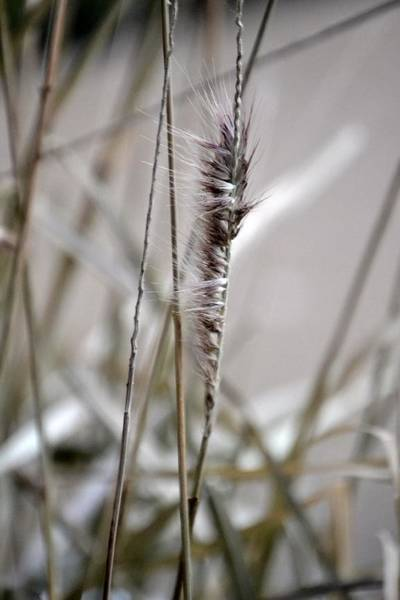 Photograph - Grass by Gerald Greenwood