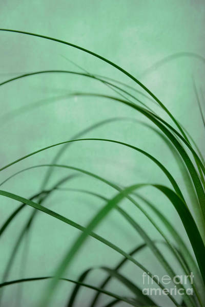 Photograph - Grass Impression by Hannes Cmarits