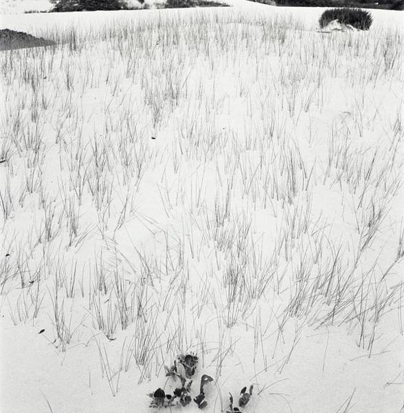Growth Photograph - Grass In Sand by Horst P. Horst