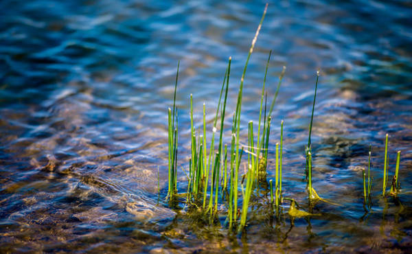 Photograph - Grass In The Water by  Onyonet  Photo Studios