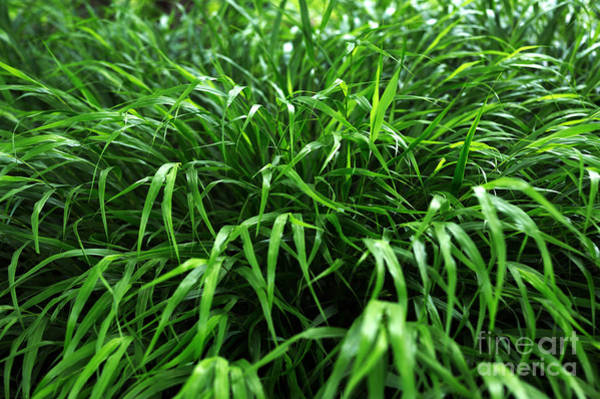 Photograph - Grass by John Rizzuto