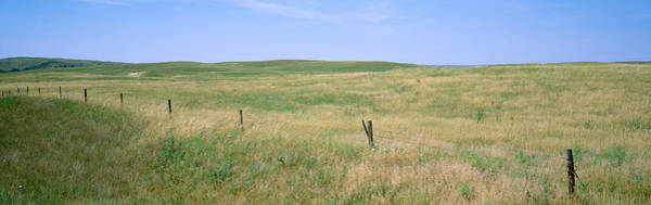 Nebraska Landscape Photograph - Grass On A Field, Cherry County by Panoramic Images