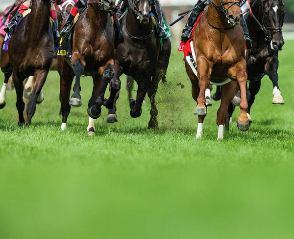 Endurance Wall Art - Photograph - Grass Turf Horse Racing by Maresa Pryor