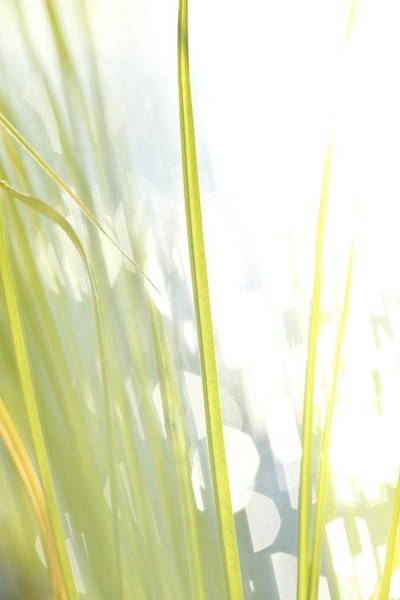 Wall Art - Photograph - Grasses And Lake - High Key - Available For Licensing by Ulrich Kunst And Bettina Scheidulin