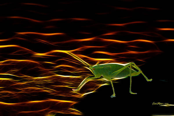 Photograph - Grasshopper In For A Dip by Ericamaxine Price