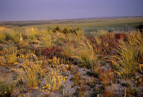 Wall Art - Photograph - Grassland by James Steinberg