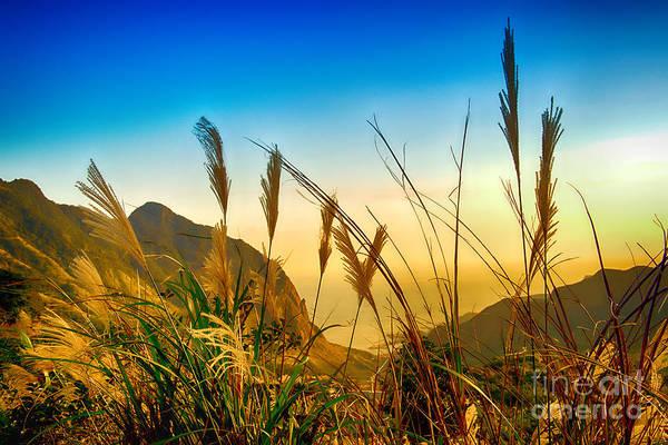 Photograph - Grassland by Yew Kwang