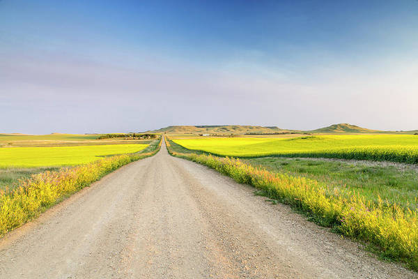 Canola Wall Art - Photograph - Gravel Road To West Rainy Butte by Chuck Haney