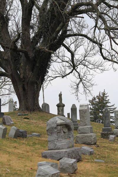 Photograph - Graveyard Tree by Angela Murdock