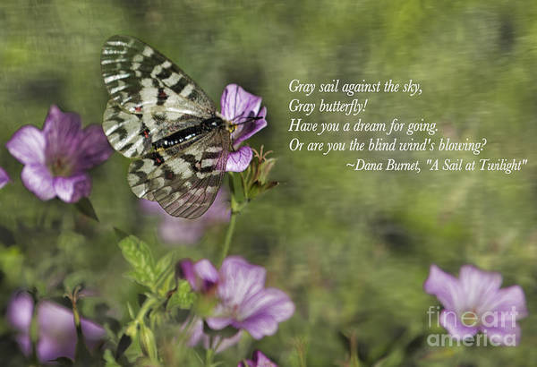 Photograph - Gray Butterfly On Pink by Belinda Greb