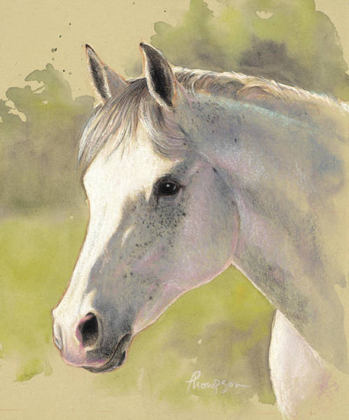Arab Horse Painting - Gray Gentleman by Tracie Thompson