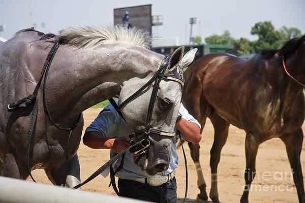 Photograph - Gray Race Horse by Jill Lang