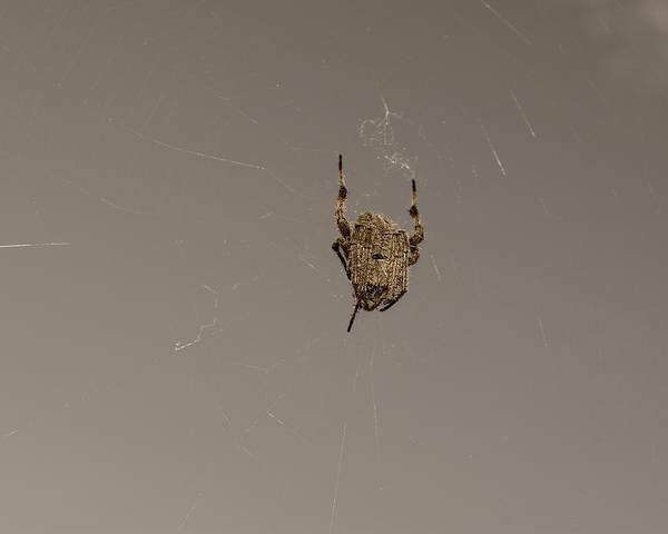 Photograph - Gray Spider On A Web by MM Anderson