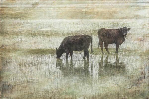 Rural Scene Photograph - Grazin In The Pond by Ramona Murdock
