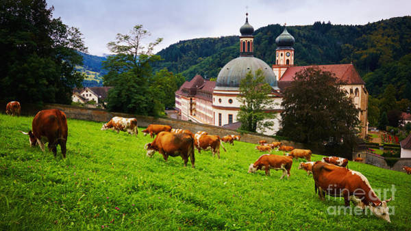Photograph - Grazing Cows In Front Of A Historic Monastery by Nick  Biemans