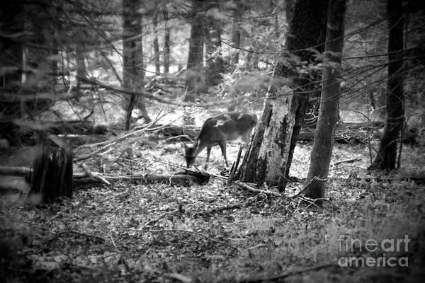 Grazing Deer Art Print